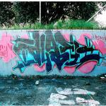 DLAE, 2008